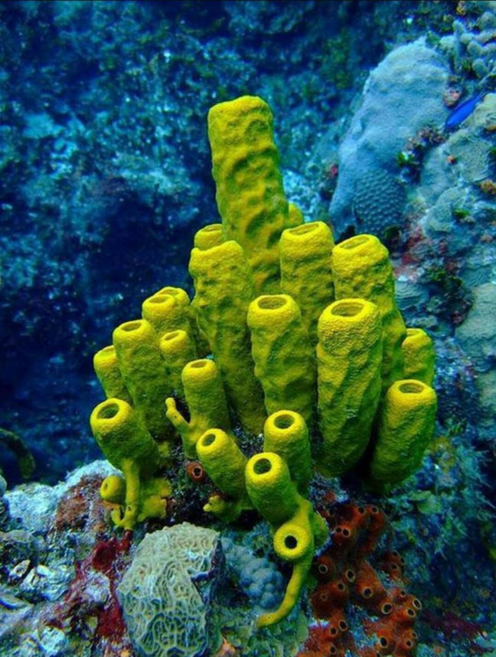 ¿Esponja? Mejor en el mar